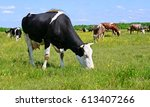 cows on a summer pasture | Shutterstock . vector #613407266