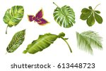 vector tropical plants and... | Shutterstock .eps vector #613448723