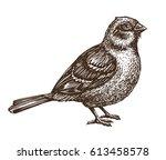 Hand Drawn Sparrow. Bird ...
