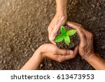 seedlings are growing in the... | Shutterstock . vector #613473953
