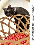 Small photo of Cat biting the basket of acerola