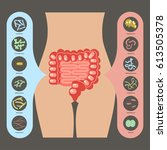intestinal flora  set of good... | Shutterstock . vector #613505378