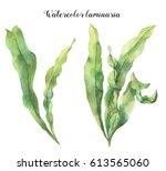 Watercolor Laminaria. Hand...