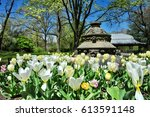 tulips blooming in prospect... | Shutterstock . vector #613591148