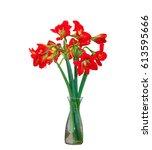 hippeastrum  or amaryllis... | Shutterstock . vector #613595666