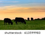 Black Angus cows grazing in silhouette against a sunset sky