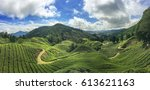 tea plantation cameron... | Shutterstock . vector #613621163