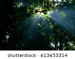 ray of light from branches of... | Shutterstock . vector #613653314