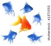 Goldfish Showing Discrimination ...