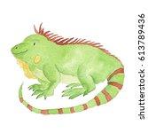 iguana watercolor green animal...   Shutterstock . vector #613789436