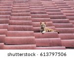 A Red Cat Peacefully Sitting On ...
