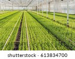 large greenhouse with lots of...   Shutterstock . vector #613834700