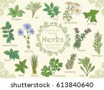 Assorted Illustrations Of Herb...
