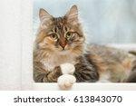 Pensive Cat Psychologist Lies...