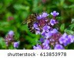 a beautiful purple soil cover... | Shutterstock . vector #613853978