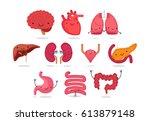 organ vector illustration | Shutterstock .eps vector #613879148