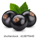 black currant branch isolated...   Shutterstock . vector #613879640