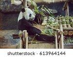 panda bear. bamboo bear. panda... | Shutterstock . vector #613964144