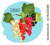 currant with green leaves of... | Shutterstock .eps vector #614020688