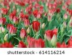 red tulips background | Shutterstock . vector #614116214