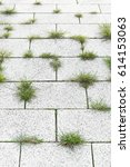 weed growth in pavement joints  ... | Shutterstock . vector #614153063