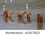 She Bear With Four Bear Cubs....