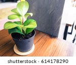 small plant of pot on the... | Shutterstock . vector #614178290