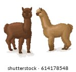 Alpaca Isolated On White Two...