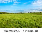 grass field  green spring... | Shutterstock . vector #614180810