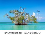 mangrove tree in the caribbean...   Shutterstock . vector #614195570