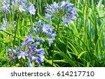 flowers in the park | Shutterstock . vector #614217710