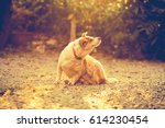 vintage picture style of a dog... | Shutterstock . vector #614230454