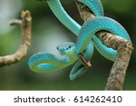 viper snake | Shutterstock . vector #614262410