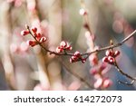 flowering trees in april....   Shutterstock . vector #614272073