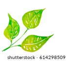 watercolor three green leaf | Shutterstock . vector #614298509