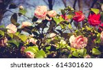 Stock photo rose in the garden rose flowers decoration floral background 614301620
