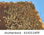 bees on honeycomb frame against ... | Shutterstock . vector #614311409