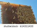 bees on honeycomb frame against ... | Shutterstock . vector #614311433