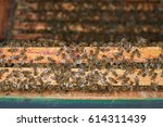 honey bees in their hive | Shutterstock . vector #614311439