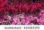 flower. low light  selective... | Shutterstock . vector #614365193