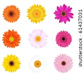 Colourful Daisies  Isolated On...