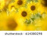 sunflower | Shutterstock . vector #614380298