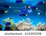 The Coral Reef Fishes In...