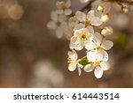 first spring flowers in sunlight | Shutterstock . vector #614443514