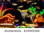 beautiful fish in the aquarium... | Shutterstock . vector #614445260