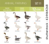 poultry farming. goose breeds... | Shutterstock .eps vector #614464268