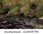 A Small Stream Runs Through A...