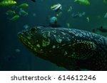 sea fish. coral reef. | Shutterstock . vector #614612246
