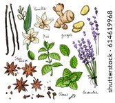 color herbs. spices. herb drawn ... | Shutterstock .eps vector #614619968