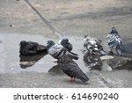 Wet Pigeons